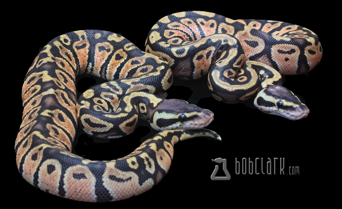 Pastel poss het clown pair