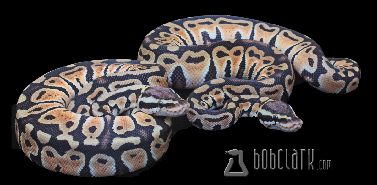 Pastel het clown pair