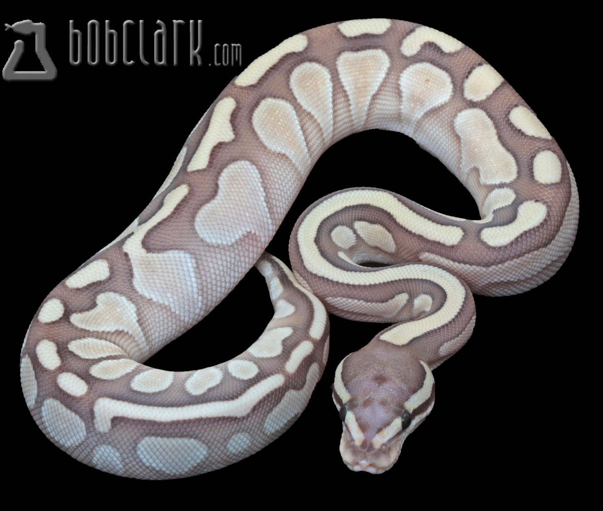 Scaleless het Butter